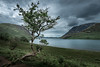 The Dancing Tree! - Crummock Water, Lake District