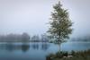 Misty Calmness! - Tarn Hows, Lake District