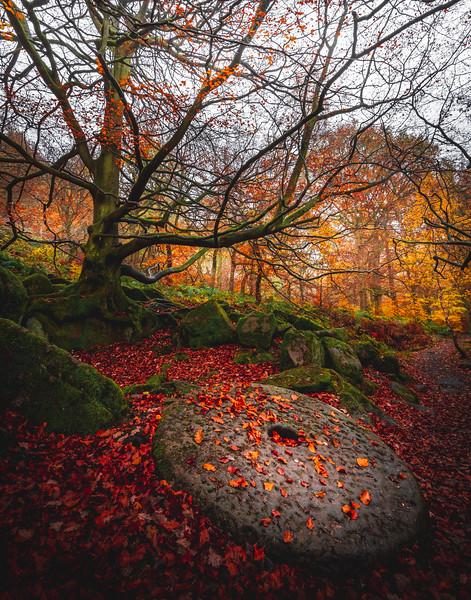 Times Gone By! - Padley Gorge, Peak District
