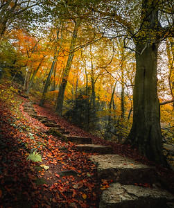 Ascend into Autumn! - Ilam Park, Peak District