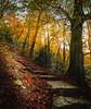 Ascend into Autumn! - Ilam Park, Peak District