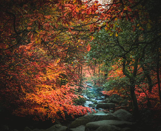 Colourful Chaos! - Padley Gorge, Peak District