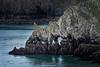 Ancient Beasts - Pembrokeshire Coast, Wales