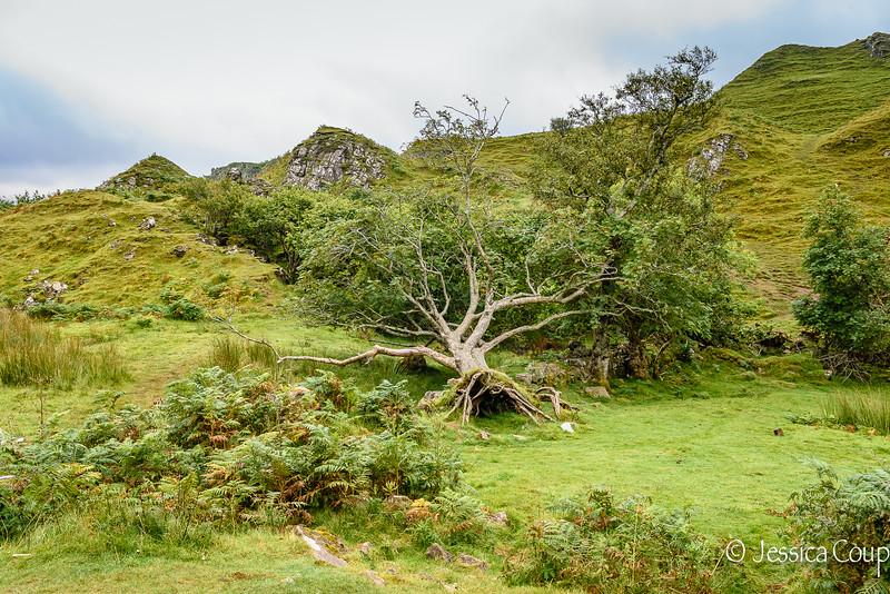 Hollowed Tree