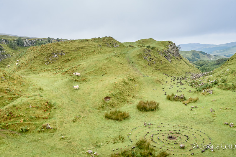 No Fairy Sightings but Lots of Sheep