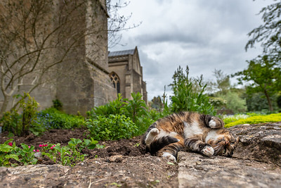 UK Weather - Wells Cathedral Cat