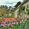 """Tulip Time"" - Botanic Garden Oxford"