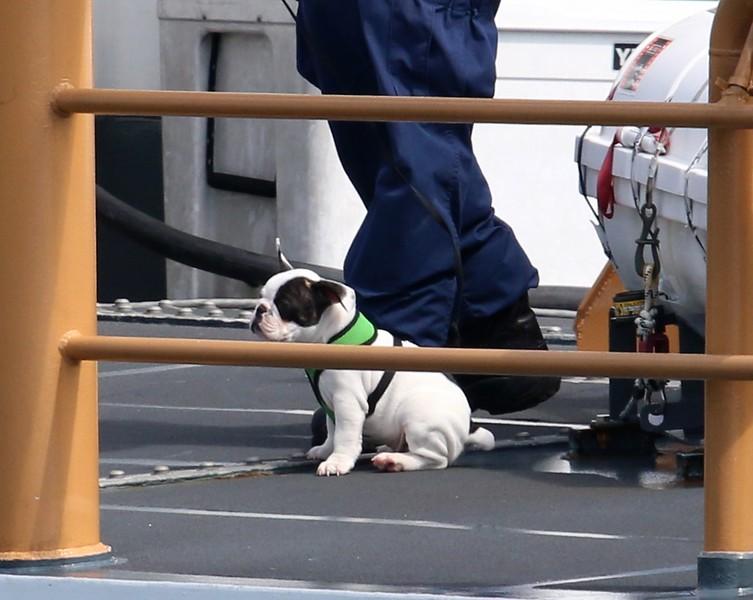 Mascot aboard the Albacore
