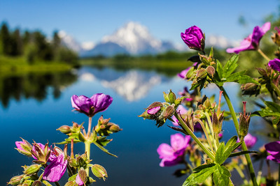 Oxbow Bend Turnout,Grand Teton National Park, Wyoming, USA