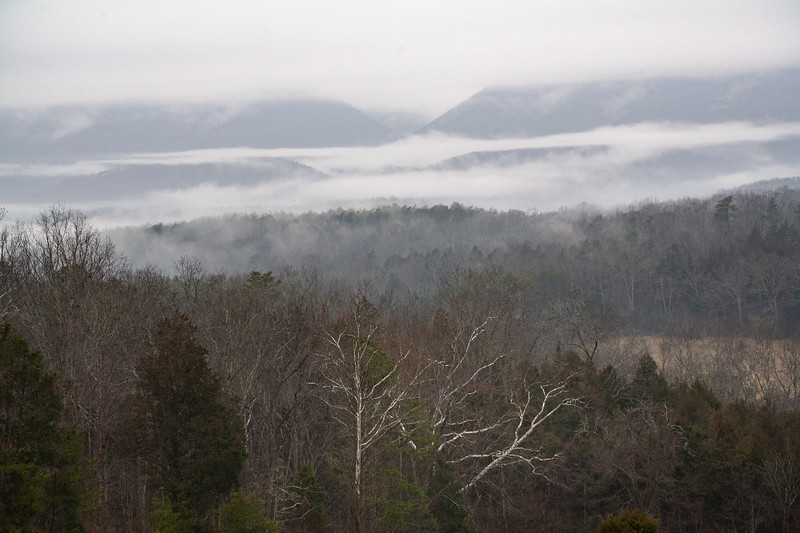 Fog and the Sycamore Tree, Botetourt County
