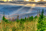 Late Day Sunrays, Great Smoky Mountains National Park