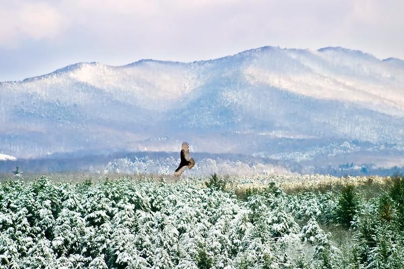 Bird and North Mountain, Botetourt Co.