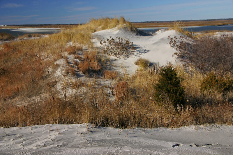 Townsends Inlet Dune