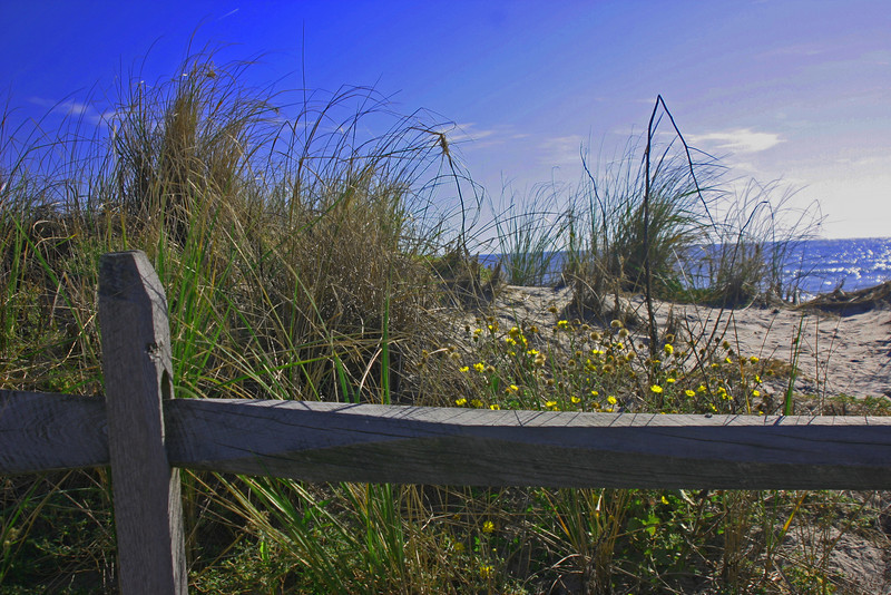Dune, Fence, Flowers