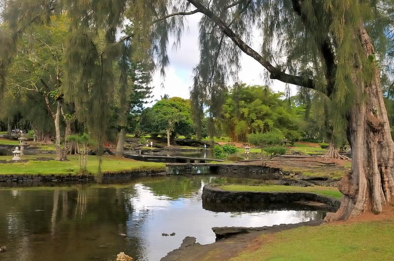 Banyan Drive Hilo, Hawaii