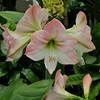 Foster Botanical Gardens  Oahu, Hawaii