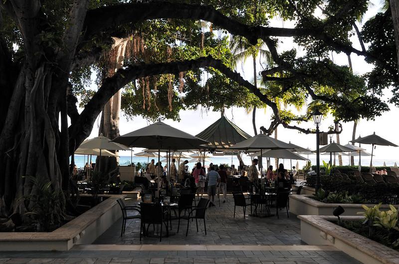 Under the banyan tree  Moana Surfrider  Waikiki, Hawaii