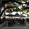 Under the banyan tree  Moana Surfrider  Waikiki, Hawaii