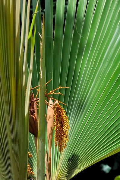 McBryde Garden  Lawai Valley   Kauai, Hawaii