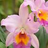 Orchid  Foster Botanical Gardens  Oahu, Hawaii
