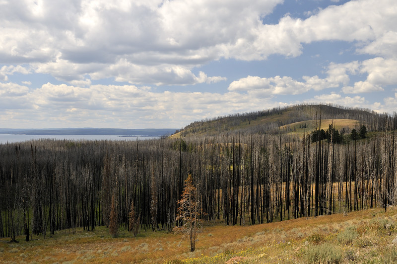 Fire damage approaching Yellowstone Lake  Wyoming