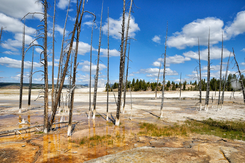 Geyser Basin  Yellowstone National Park, Wyoming
