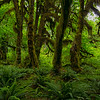 Hoh Rainforest Visitors Center