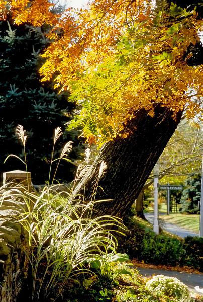 Fall 2007 - Waterford,VA