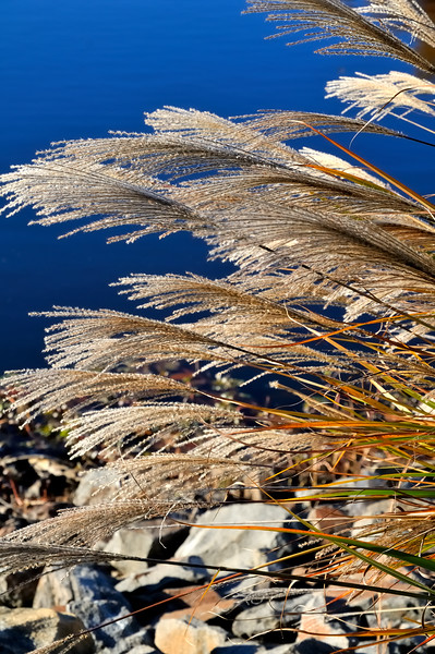 Lake Newport   Reston, Virginia