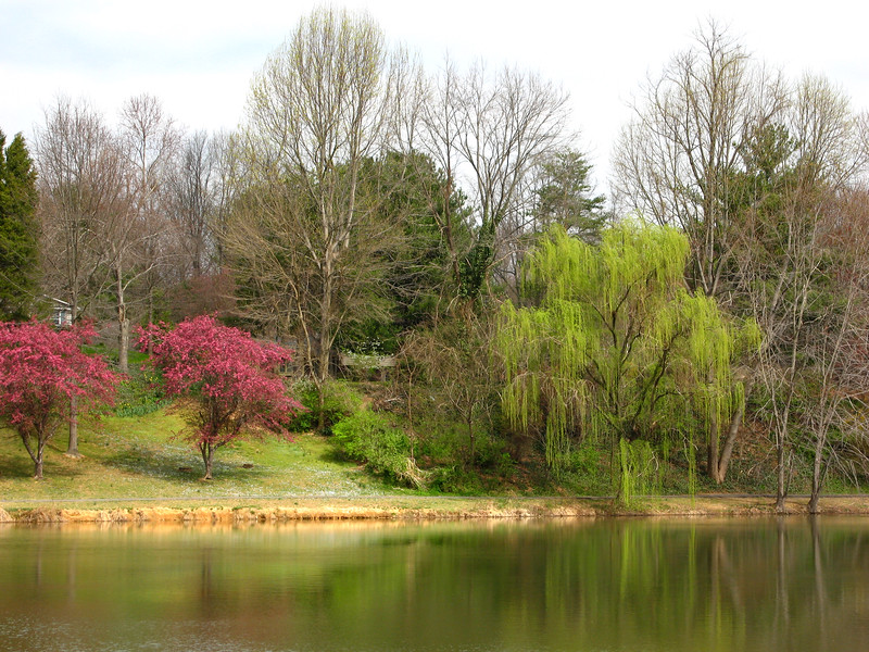 Spring colors - Northern Virginia