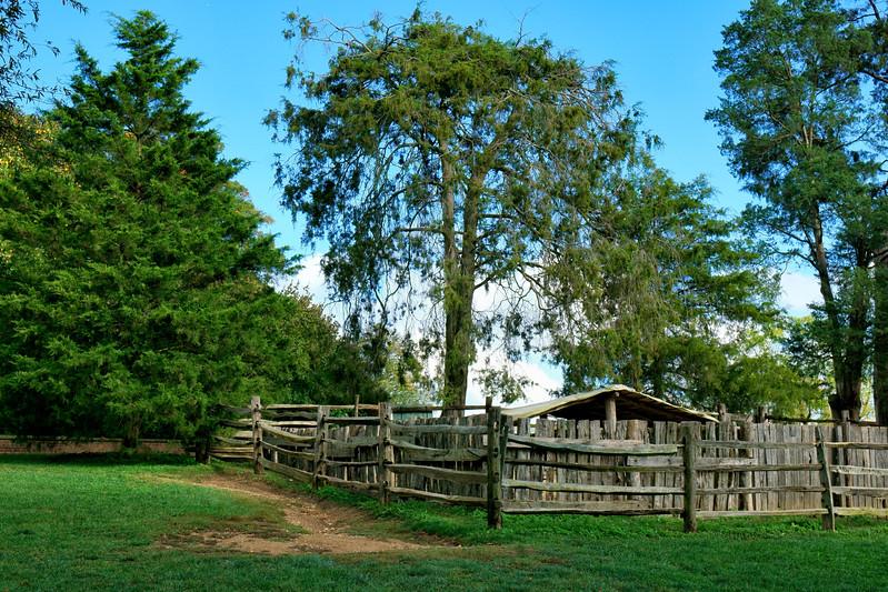 Sheep's pasture