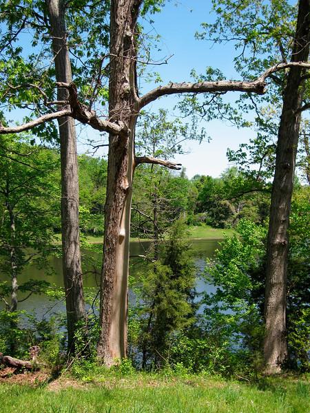 Lake Fairfax  Reston, Virginia