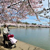 Cherry blossom hordes - Washington, DC