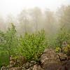 Spring fog - Wintergreen, Virginia