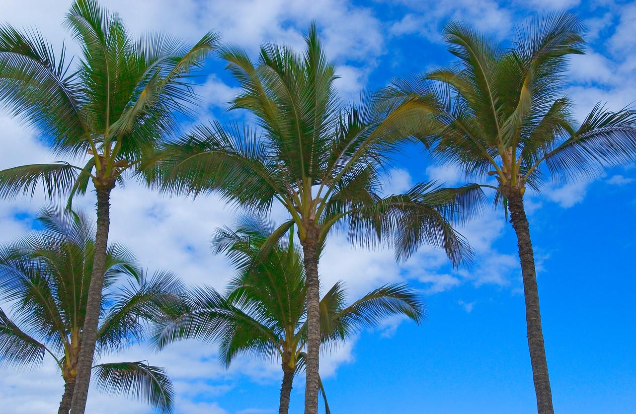 PalmTreesMaui_1583 - 2002-08-23 03 36 20 PM