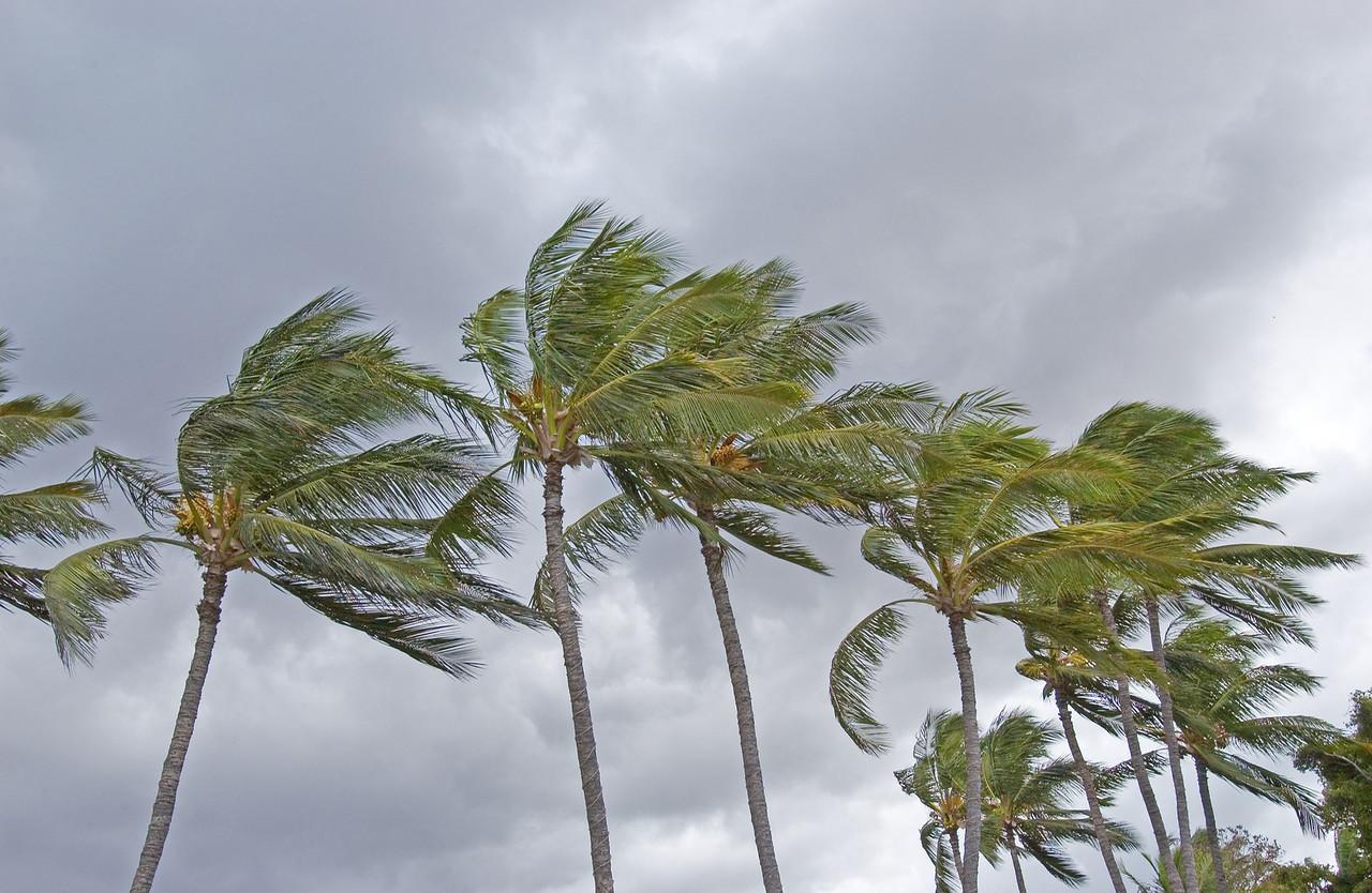 Clouds&PalmsMauii2002_01633 - 2002-08-27 08 48 18 PM