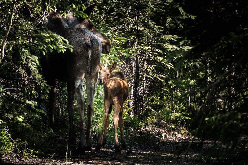 Denali_Alaska_2016-65158
