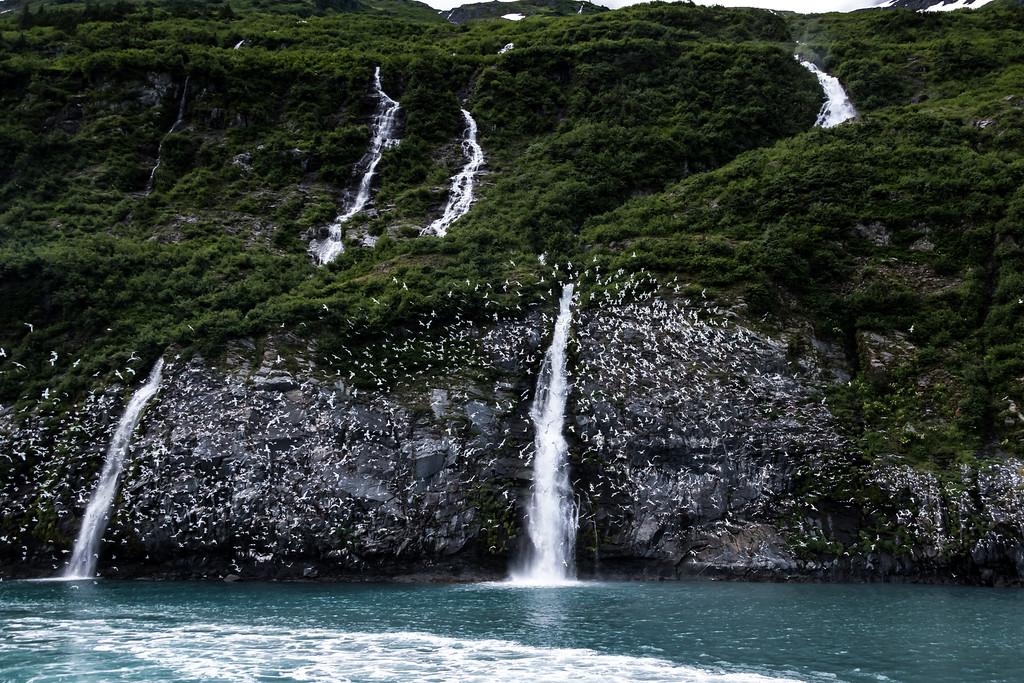Kenai_Peninsula_Alaska_2016-67117