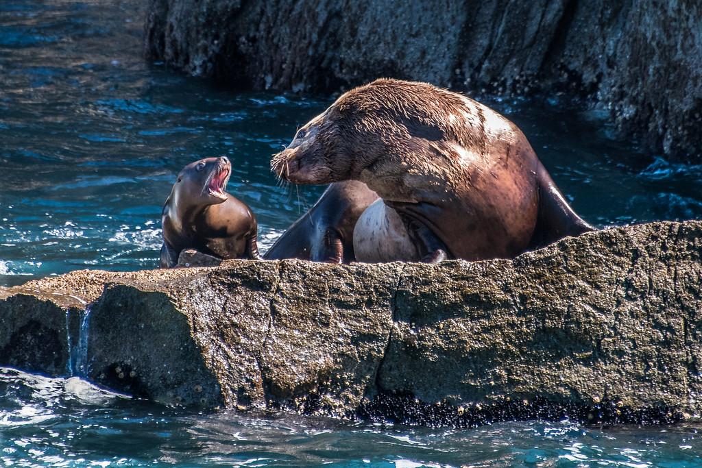 Kenai_Peninsula_Alaska_2016-68925