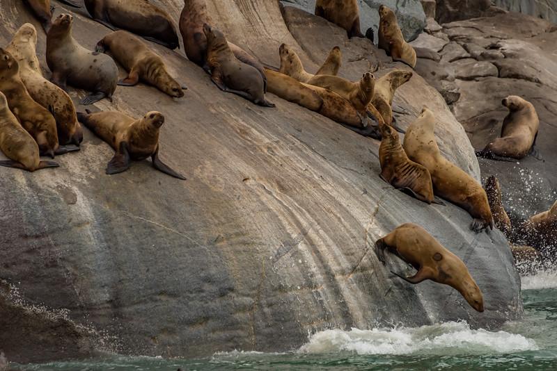 Juneau_Alaska_2016-63785