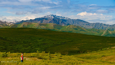 This little guy enjoys the view of Mount McKinley