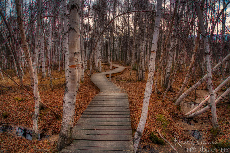 The Winding Path Between the Trees