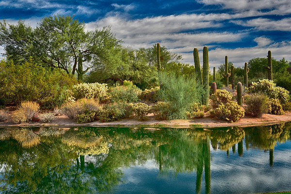 Cactus and Plants reflecting in pond