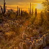 Saguaro National Park - Arizona