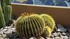 2016-04-15 US - AZ - Mayo Clinic Desert Trail 1