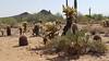 2016-04-15 US - AZ - Mayo Clinic Desert Trail 5