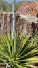 2016-04-15 US - AZ - Mayo Clinic Desert Trail 4