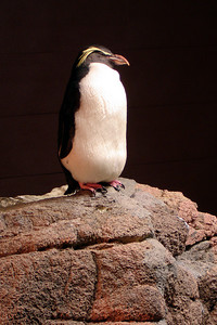 A penguin - Boston, MA ... September 3, 2007 ... Photo by Rob Page III