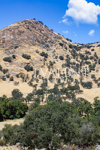 King Canyon & Sequoia National Parks