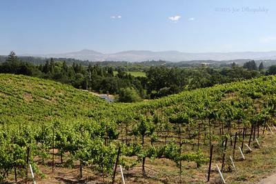 Everitt Ridge Winery